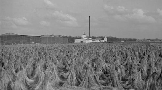 campos-nazis